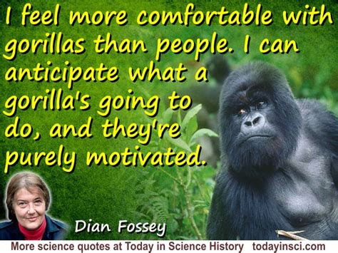 Briar Essay Quotes by Dian Fossey Quote I Feel More Comfortable With Gorillas