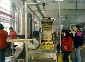 apple juice production  fruit processing  sale