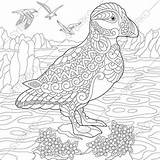 Puffin Coloring Pages Animal Adults Print sketch template