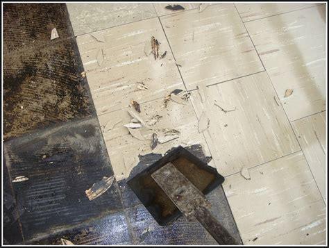 asbestos floor tile removal tiles home design ideas
