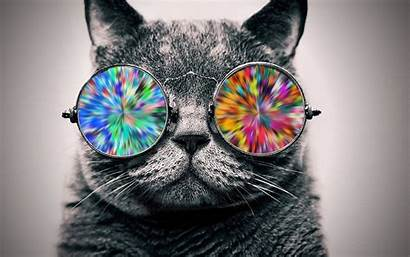 Glasses Cat Cool Wallpapers Animals Coloring Cats