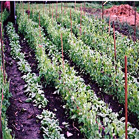 building  garden tools shed   house veggie gardener