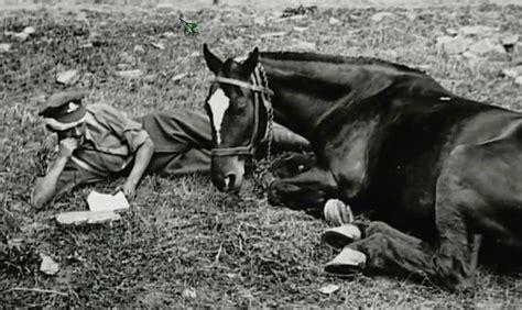 horse  rider relaxing animals  ww pinterest