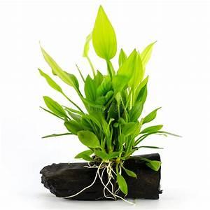 Plante Aquatique Photo Stock Image Du Algue Algues