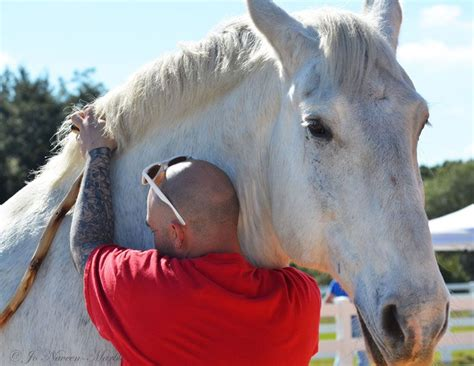 horses  warriors  transition equine assisted
