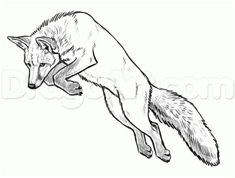 draw foxes step  step forest animals animals