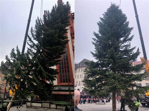 Würzburg Hat Wieder Einen Weihnachtsbaum