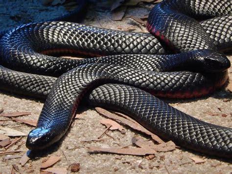 les huissiers peuvent ils entrer dans les chambres serpents en australie 18 photos prouvant que ce pays est