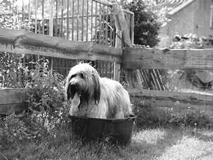 Kleiderschrank Müffelt Was Tun : frag mutti was tun wenn der hund stinkt hilfe mein hund m ffelt ~ Bigdaddyawards.com Haus und Dekorationen