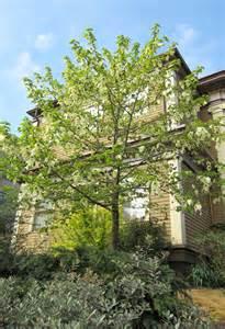 dove tree portland tree tour