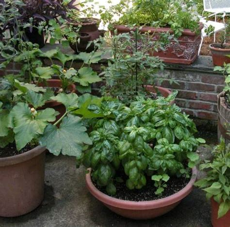 growing vegetables in containers wiese acres container gardens growing vegetables and herbs
