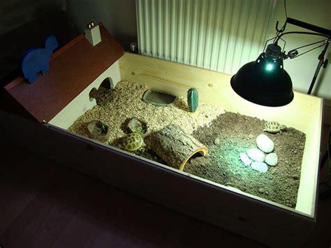 tortoise enclosure ideas