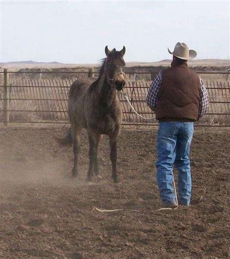 gentle horse solutions montana baker equinenow horses