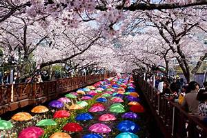 The Most Beautiful Places to See Cherry Blossoms in South ...