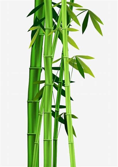 Bamboo Leaves Clipart Cartoon Transparent Pattern Clip