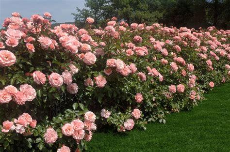 primavera in giardino come preparare il giardino per la primavera