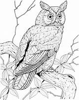 Owl Coloring Pages Animals Tree Wildlife sketch template