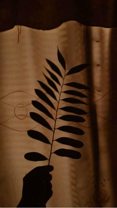 Aesthetic Brown Wallpapers Tan Desktop Iphone Wallpaperaccess