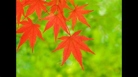 autumn leaves youtube