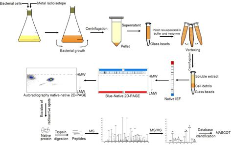 And Blue Analysis by 2d Blue Creative Proteomics