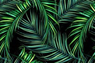Home Interior Design Wallpapers Tropical Palm Leaf Wallpaper Wallpapersafari