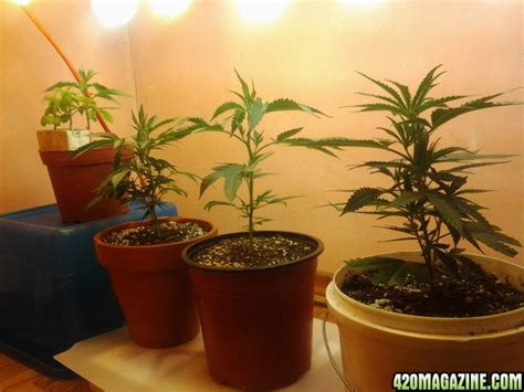 cfl grow lights at home depot