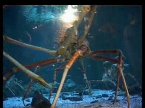 lebt der megalodon noch seite  allmystery