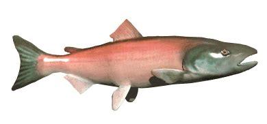 ocean fish animated gifs underwater amazing pictures