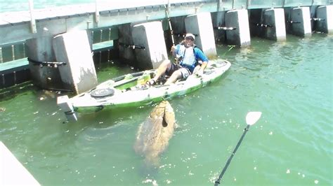 fish kayak grouper goliath fishing rod cape coral catch catches largest ever florida giant chew bottom caught reel shark lands