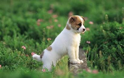 Dog Pretty Puppies Fanpop Dogs Puppy Wallpapers