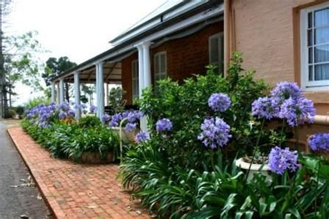 landscaping with agapanthus agapanthus and pots in garden bed washington street pinterest