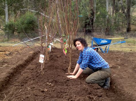 Stopgap Fruit Tree Planting Bring On The Cultivated Beds