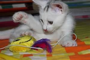 Katzenspielzeug Selber Machen Karton : katzenspielzeug selber machen 3 gute ideen chip ~ Frokenaadalensverden.com Haus und Dekorationen