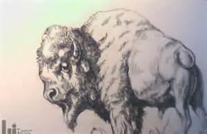 Buffalo Tattoo Designs