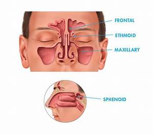 Nasal And Sinus