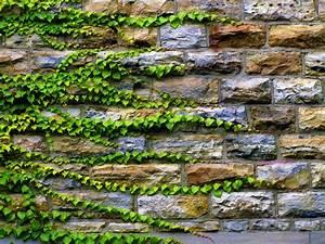 Bodendecker Statt Gras : hello and welcome to secret garden landscape i would like to thank you 2048x1536 in 1161 ~ Sanjose-hotels-ca.com Haus und Dekorationen