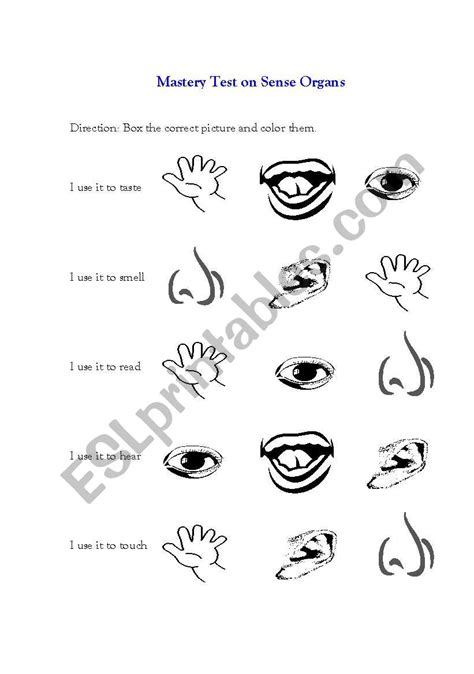 worksheet on sense organs the best and most
