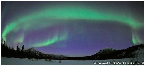 alaska northern lights tour wild alaska travel alaska northern lights tour wild