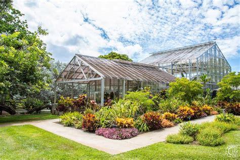 foster botanical garden foster botanical garden in honolulu oahu hawaii
