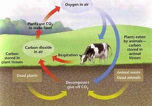 Yksd Biology Chapter 7 Lesson 3  U0026quot How Plants Give Off Oxygen U0026quot