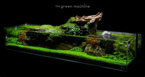 The Green Machine Aquascape by Aquascape Tutorial Simplicity By Findley