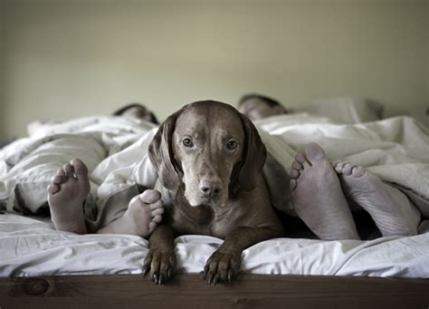 Dog On Bed With People