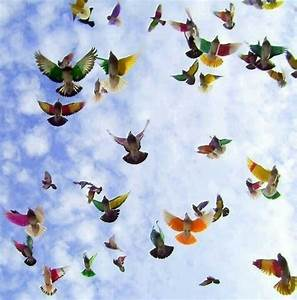 Colorful, Birds, Flying