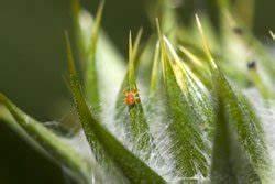 Spinnmilben Natürlich Bekämpfen : bl tter von zimmerpflanzen reinigen 3 tipps ~ Buech-reservation.com Haus und Dekorationen