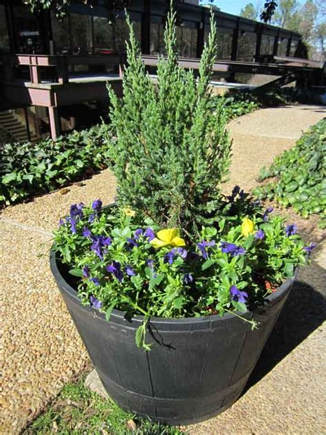 make a whiskey barrel planter the home depot garden club