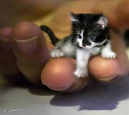 cat world is this a photo of the world s smallest cat