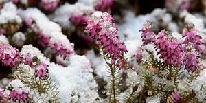Welche Bäume Blühen Jetzt : welche pflanzen bl hen im winter ~ Buech-reservation.com Haus und Dekorationen
