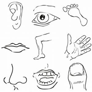 Body Parts Clipart   Other Files   Clip Art