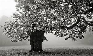 Papier Peint Arbre Noir Et Blanc : poster trompe l 39 il noir et blanc arbre pas cher boutique d co hexoa ~ Nature-et-papiers.com Idées de Décoration