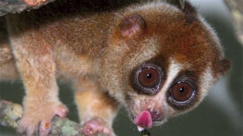 Endangered Animals Wallpapers - endangered animals amazing wallpapers